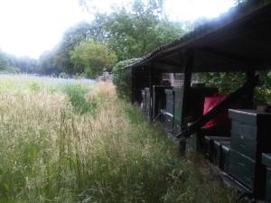Wageningen-20150626-00417